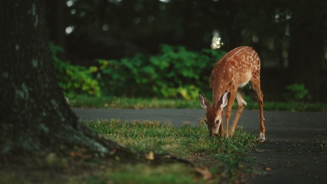 What a Deer Knows About Acting That You Don't