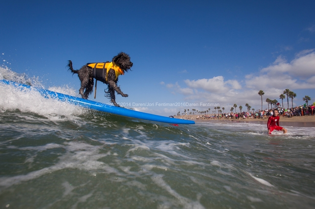 Take an Acting Break to Watch Dogs Surf + More L.A. Actor Events 9/21-9/28