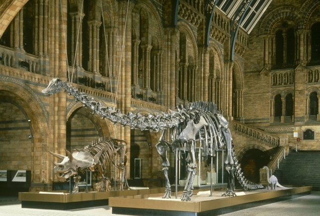 London Casting: Hourly Work at The Natural History Museum