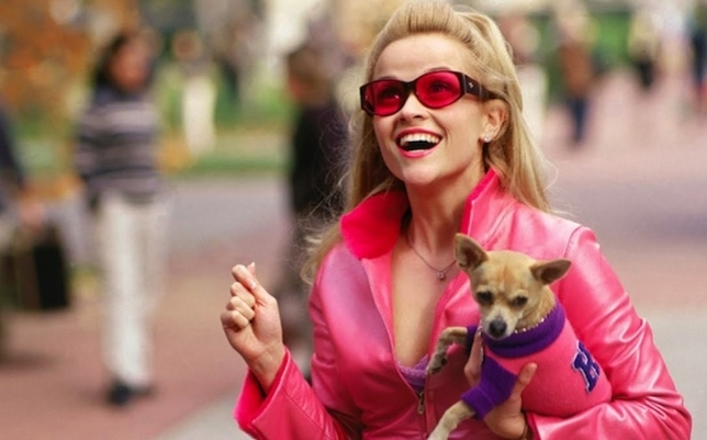 Now Casting: Play a Lead in 'Legally Blonde' Stage Musical + More